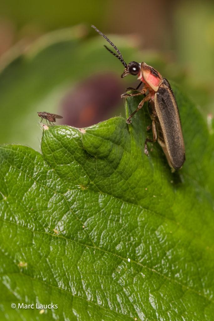 Lightning Bug Surprise 1